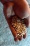 Продается фасоль белая в наличии более 3 тонн цена договор
